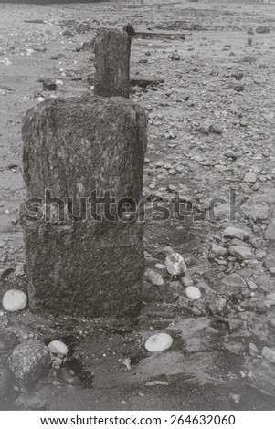 Remains of Old wooden, timber jetty supports sticking out of the mud along the river bank of the Thames at Greenwich at low tide. Black and white faded effect.  - stock photo