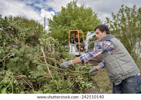 Removing a tree from a garden - stock photo