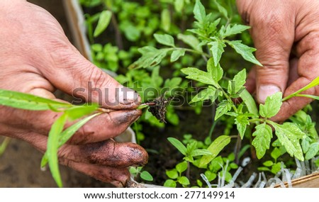 Removing weeds from the plantation of young plants - stock photo