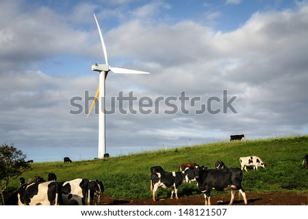 Renewable, clean energy being generated by a wind turbine in field of cows.