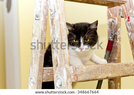 renovation cat on a wooden painting ladder in interior