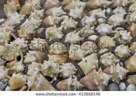 Repeat beach whelks - stock photo
