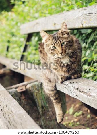 Reposing cat - stock photo