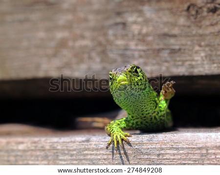 Reptile - stock photo