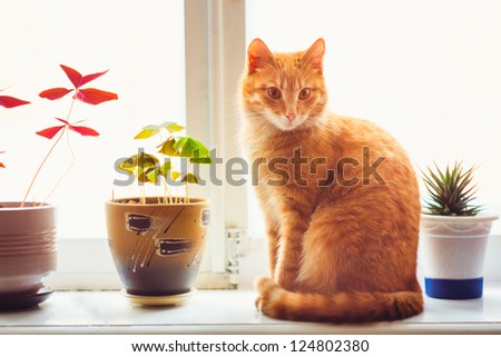 Res domestic cat sitting on a white window sill - stock photo