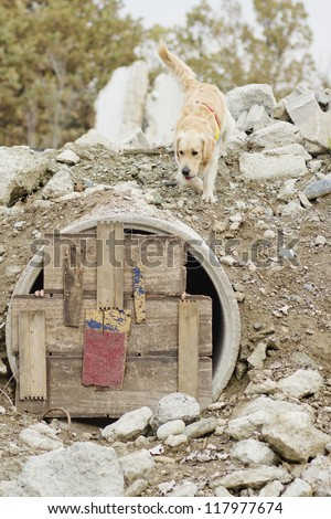 Rescue dog training - stock photo