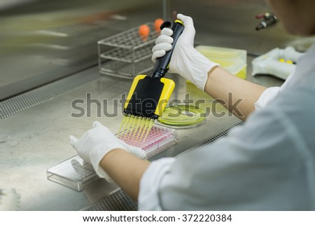 Researcher transfers testing fluid to 96 well plate for microbiological laboratory - view from her back in biosafety cabinet  - stock photo