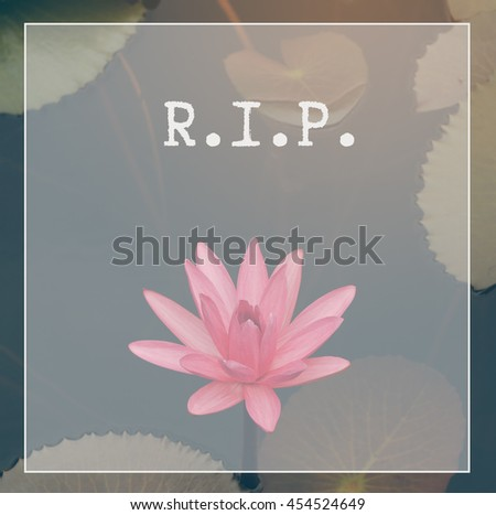 Rest peace rip quote lotus flower stock photo edit now 454524649 rest in peace rip quote with lotus flower or waterlily in the pond background mightylinksfo