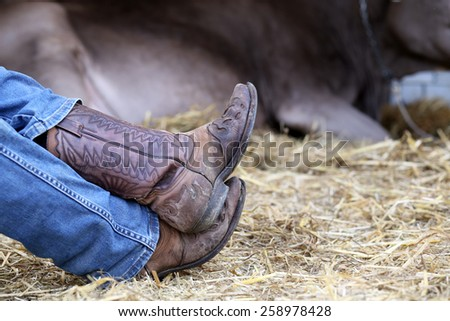 rest of the tired cowboy in the barn of the farm and a cow in the background - stock photo