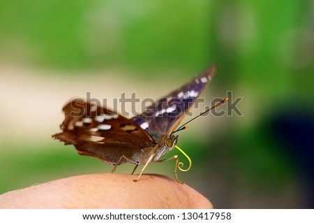 Resting butterfly on hand - stock photo