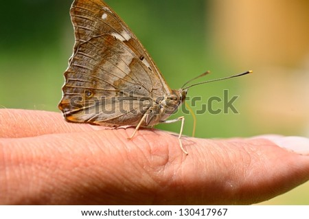 Resting butterfly on hand