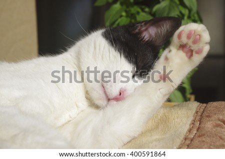 Resting cat washing its face - stock photo