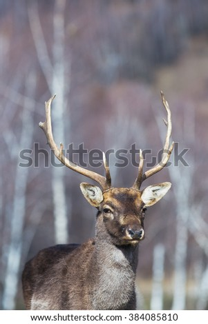 resting deer in outdoor
