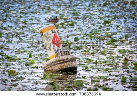Resting family of ducks on buoy