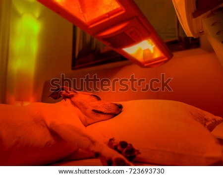 Therapy Dog Stock Images Royalty Free Images Amp Vectors
