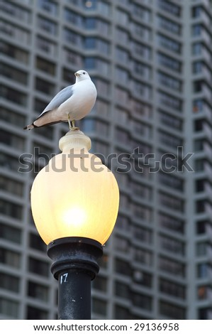 Resting seagull on the lamp and the condo on the background - stock photo