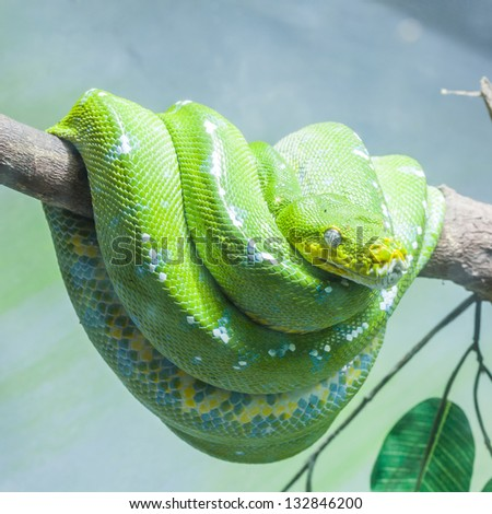Resting wild green snake on a branch - stock photo