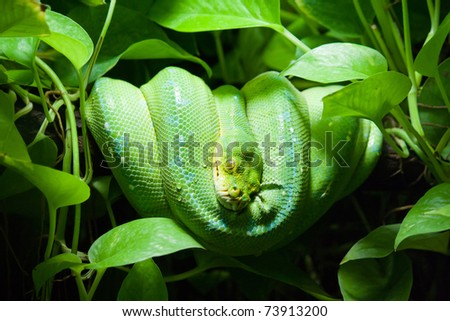 Resting wild green snake on a branch with green leaves