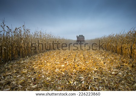 Retracted cornfield after a passing harvester - stock photo