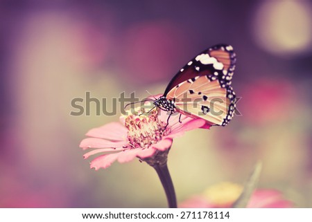 retro and vintage tone butterfly on pink flower in the garden on sunny day  - stock photo