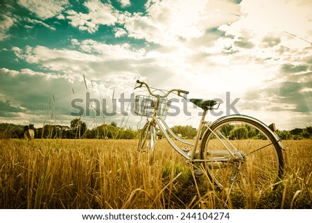 Retro bicycle in summer grass field, vintage tone