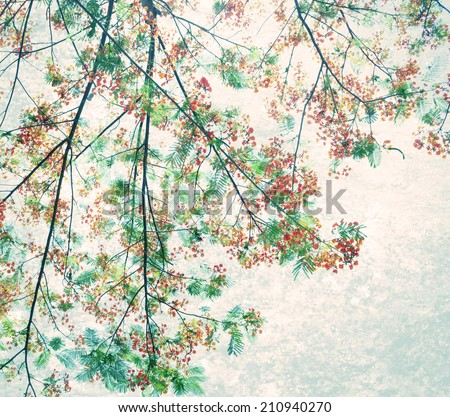 Retro  color tone of Flam-boyant flower with light grunge background - stock photo