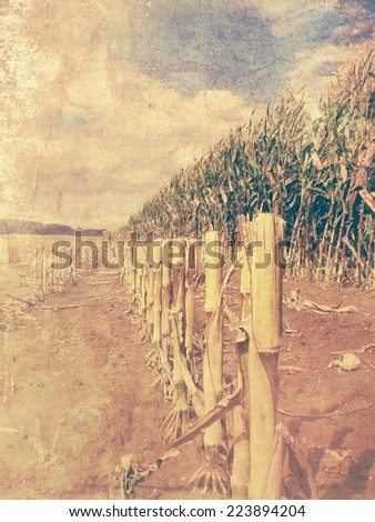 Retro corn field - arable land picture with old photo effect - stock photo
