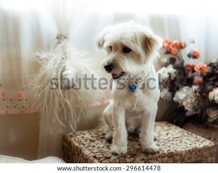 Retro dog portrait - stock photo