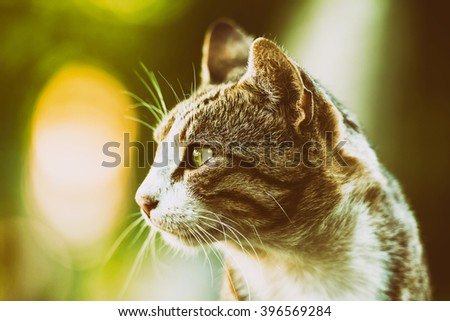 Retro Filter Of Domestic Cat Profile Portrait - stock photo