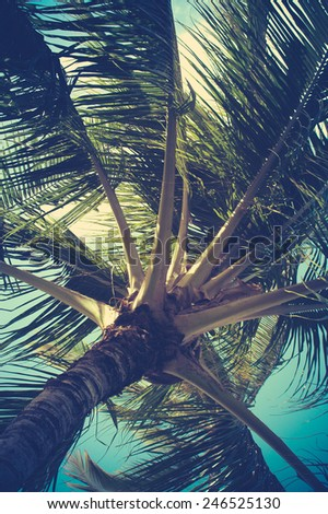Retro Filtered Palm Tree Detail In Hawaii - stock photo