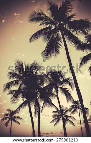 Retro Filtered Sepia Tropical Palm Trees - stock photo