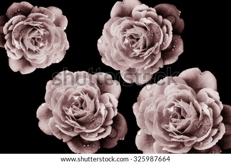 Retro flowers,Vintage Flowers background - stock photo