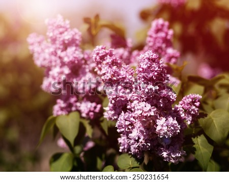 Retro lilac flowers - stock photo