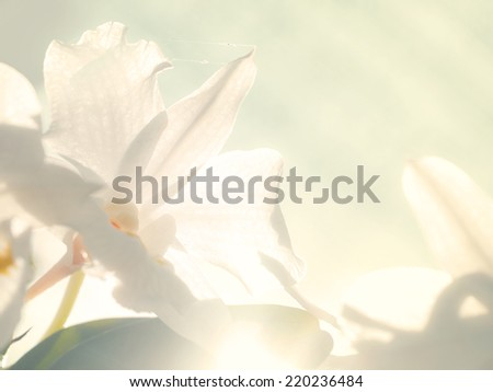 Retro natural background, with pale white flowers - stock photo