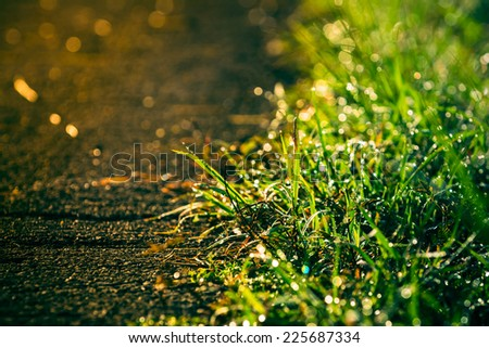 retro of grass beside the road with dewdros - stock photo