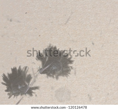 Retro paper texture with two chrysanthemums sketched - stock photo
