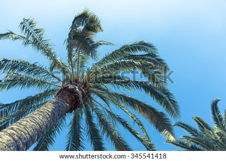 Retro style filter tropical palms low angle view of fronds in breeze above against blue sky. - stock photo