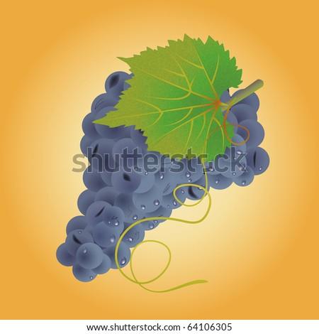 Retro style grape cluster on the orange background - stock photo