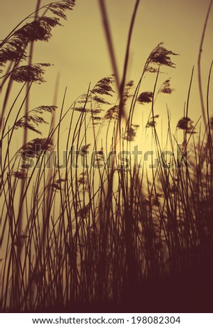 Retro style grass silhouette - stock photo