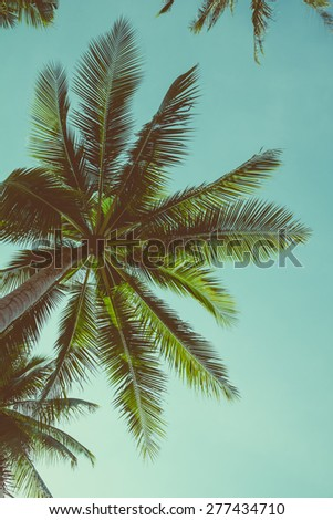 Retro toned palm tree over sky background - stock photo