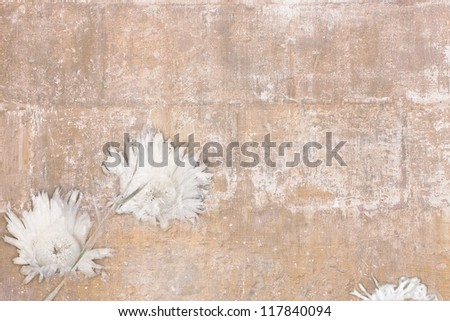 Retro wallpaper with two white chrysanthemums and a bud - stock photo