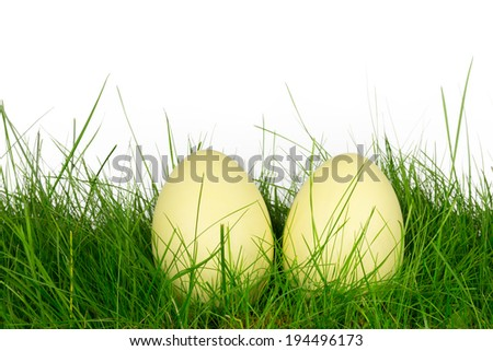 Rhea eggs in a meadow