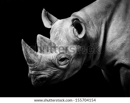 Rhino - stock photo