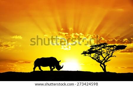 rhino africa - stock photo