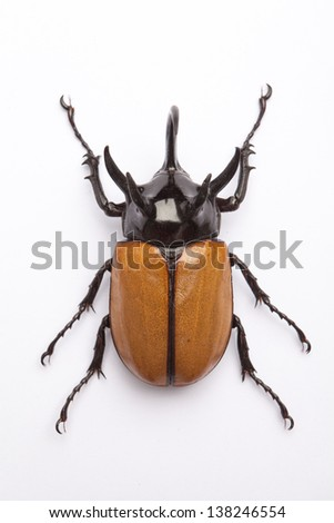 Rhino big horn beetle bug isolated on white background  - stock photo