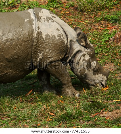 rhino in forest