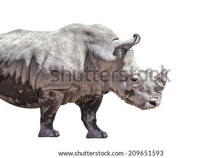 Rhino isolated on white background