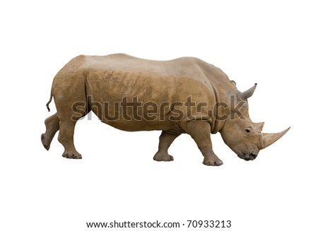 Rhino isolated on white background, clipping path included