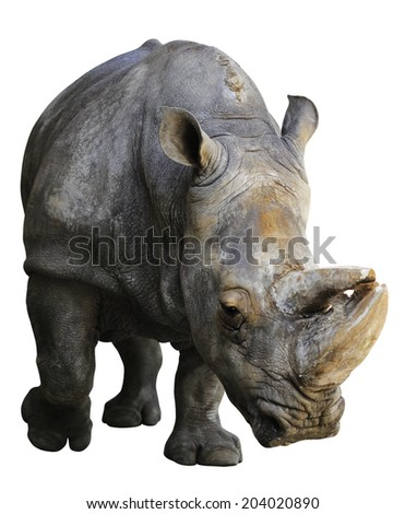Rhino isolated over white