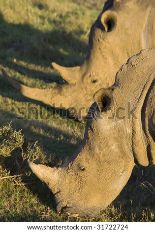 Rhino mother and calf - stock photo